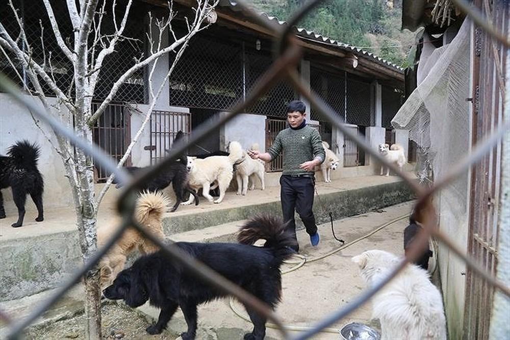 Bạn nên mua chó Bắc Hà ở các trại chó chuyên nghiệp