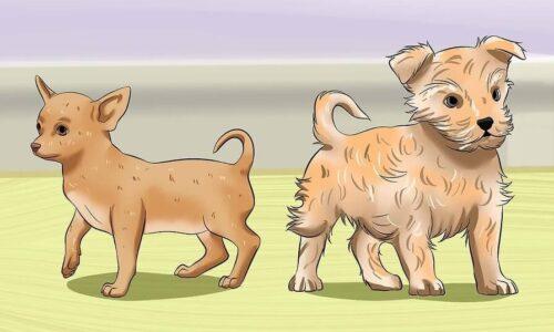 Cách dạy chó đi vệ sinh đúng chỗ một cách dễ dàng
