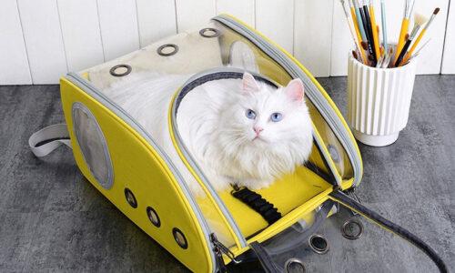 Top 7 túi vận chuyển chó mèo được ưa chuộng nhất 2021