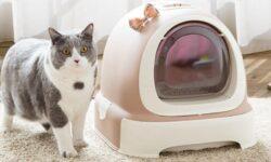 Cách chọn mua nhà vệ sinh cho mèo phù hợp